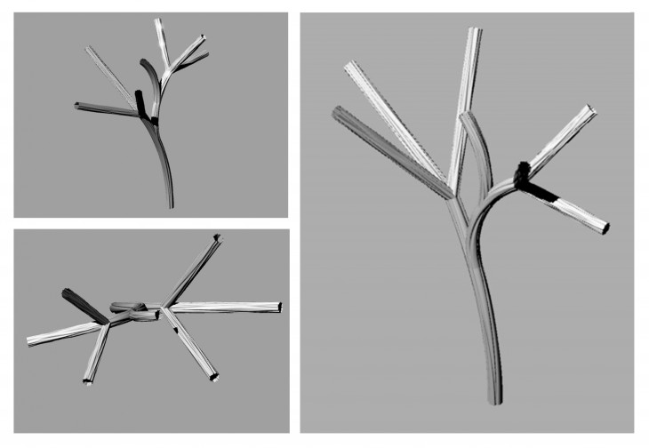 Branching of Myogenesis Phase 2 - Hypertrophy