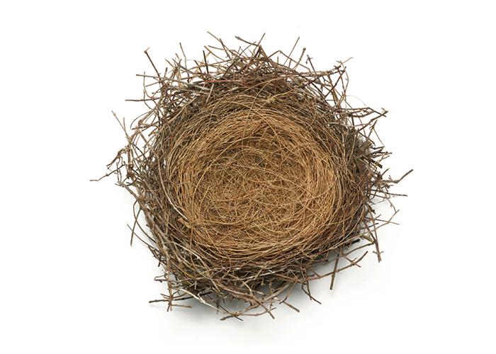 bird_nest