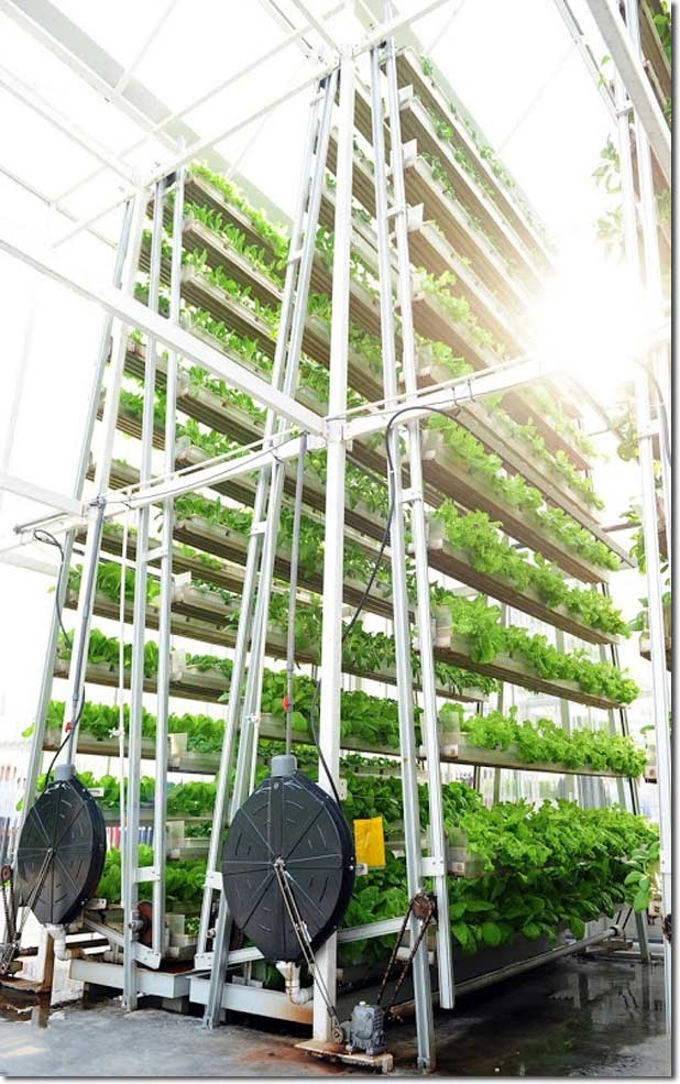 Vertical_Farming_2_skygreens_vertical_farm
