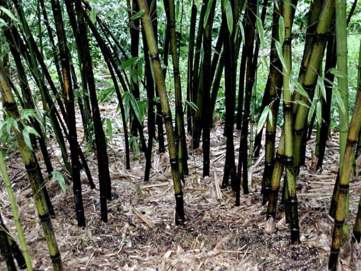 Bamboo has a widespread root system as well as an enveloping canopy, which makes it a great water barrier to control soil erosion. Bamboo is widely used in a number of developing countries to protect crops and villages from washing away. Bamboo's high nitrogen consumption helps mitigate water pollution, and its roots are good for the soil. Bamboo can be used in a wide range of products, from paper to construction materials and flooring. There's bamboo furniture, bamboo sheets, bamboo yoga blocks and more. Some of the first paper products were made from bamboo, and today it is widely used to make a soft but durable bamboo clothing as well as to build fences, walls, bridges, bicycles, skateboards, helmets and computer keyboards. As bamboo's popularity increases, it's being used in more and more products, creating many beautiful ways for you to green your home and your lifestyle.