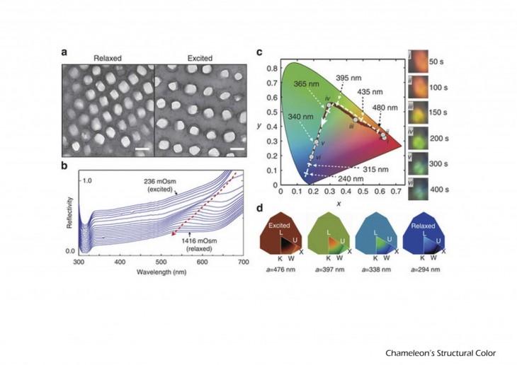 Chameleon Structural Color