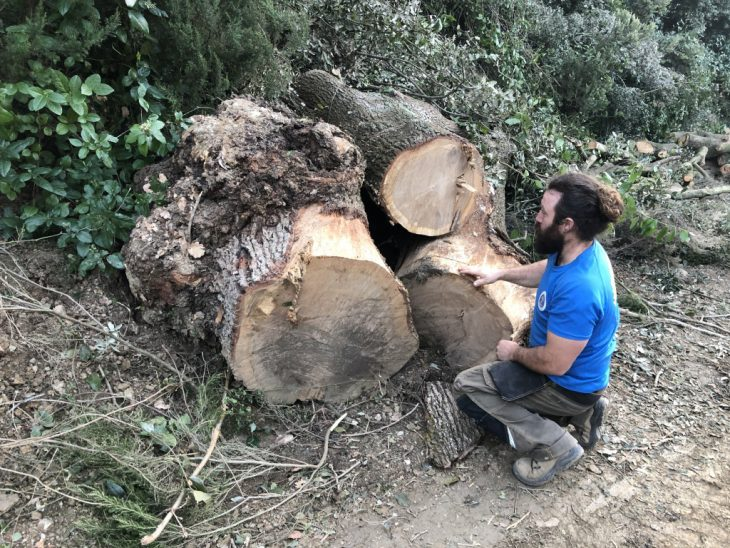 Valldaura Labs Produces Fully Traceable Wood, One Step