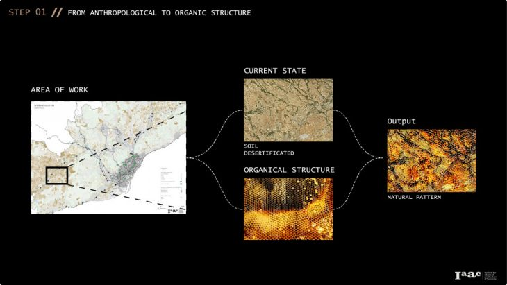 Rural Farms - Step 1. From anthropological to organic structure