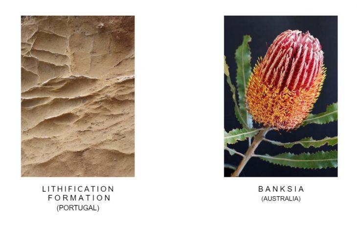 Nature forms, generative nature
