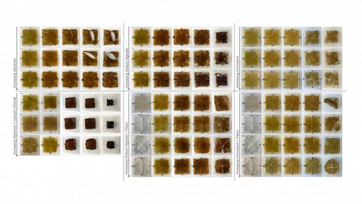 AmberLaminaria_BioplasticExperiments